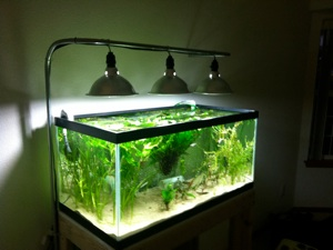 My inexpensive cfl light solution page 13 the planted for Fish stores in ma